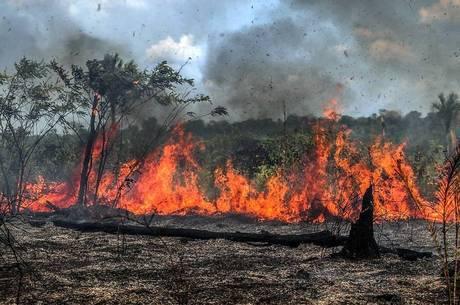 Desmatamento na Amazônia caiu 26,7% em julho, diz INPE