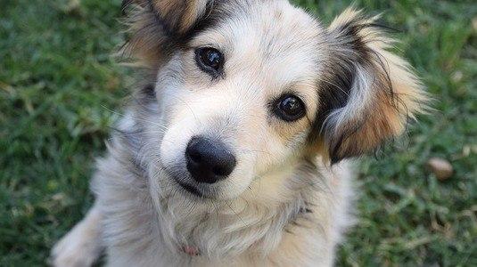 Dia Nacional dos Animais: saiba como ajudar os pets na pandemia (Pixabay)