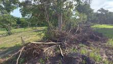 Fazendeiro é multado por desmatar vegetação nativa de cerrado