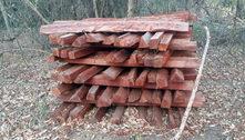 Polícia descobre grande exploração ilegal de madeira em bioma protegido