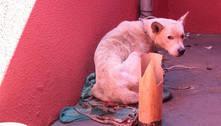 Liberdade durou pouco e justiça mantém prisão de homem que deixou cachorro morrer no frio