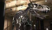 Dinossauros teriam vivido onda de frio antes da queda de asteroide