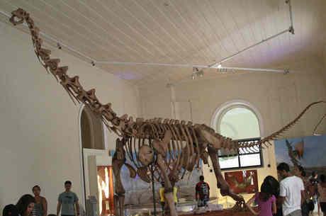 Esqueleto que estava em exposição do Maxakalisaurus topai