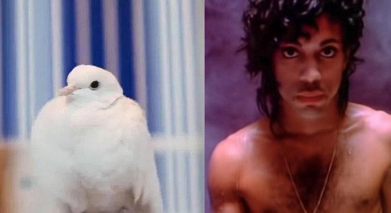 Pássaro teve problemas de saúde em decorrência da idade avançada