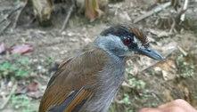 Ave considerada extinta é vista pela 1ª vez em 172 anos na Indonésia