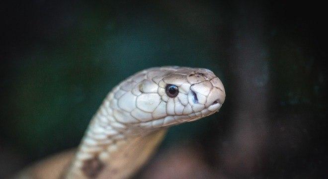 Após ser encontrada, cobra foi encaminhada ao Zoológico de Brasília