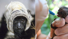 Projeto pede ajuda para continuar socorrendo primatas brasileiros