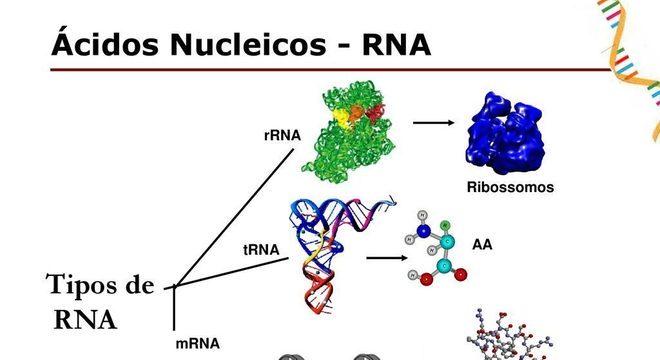 DNA e RNA - Definição, características, principais diferenças e funções