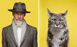 As fotos foram transformadas em um jogo de cartão de memória: 'Você se parece com seu gato?'