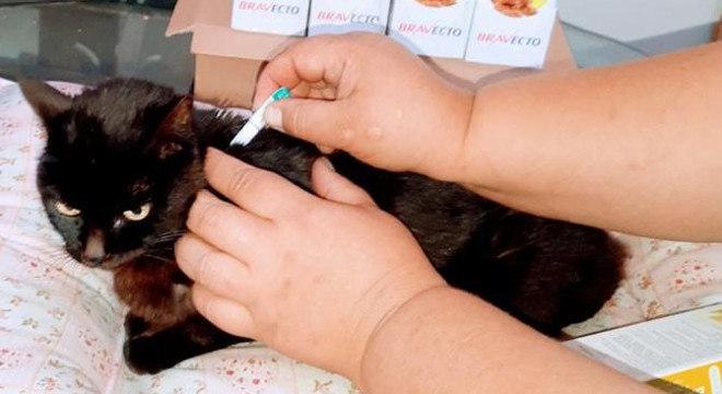 Gatos e cães que vivem em abrigos, à espera de adoção, receberão o medicamento
