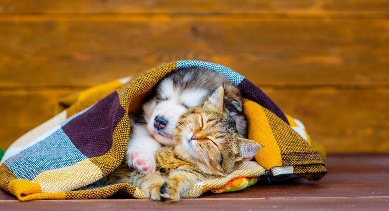 Doenças de inverno nos pets: veja como cuidar e prevenir