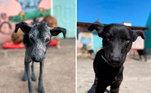 Magro e sem pelos, o cãozinho reviveu nas mãos da ONG