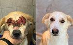 A crueldade a que alguns bichos são submetidos é inimaginável