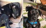 As imagens que compartilham mostram os processos de recuperação dos animais