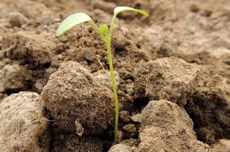 Veja quem procurar ao receber sementes em casa