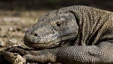 Quase 30% das espécies do planeta correm risco de extinção