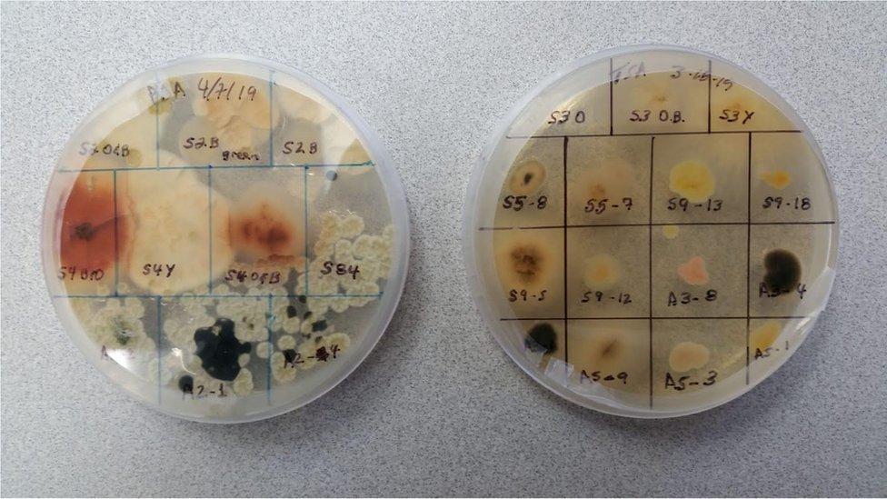 Fungos e bactérias pegam carona nas partículas presentes na fumaça