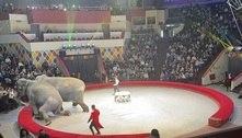 Duelo de elefantes termina em caos completo em circo da Rússia
