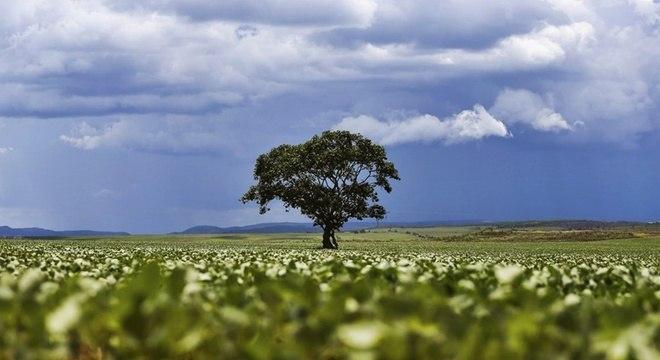 Brasil detém a maior biodiversidade de árvores do planeta