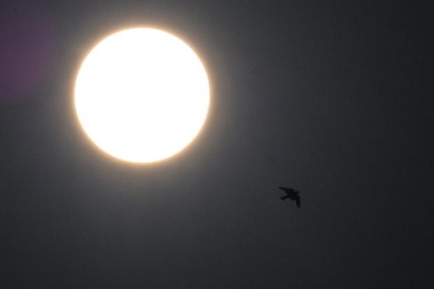 Aconteceu na madrugada desta quinta-feira (10) o único eclipse solar anelar de 2021. O fenômeno pode ser visto perfeitamente no Hemisfério Norte