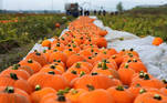 Mutterstadt (Alemania), 14/10/2020.- Cosecha de calabazas en la localidad alemana de Mutterstadt, este miércoles. EFE/RONALD WITTEK