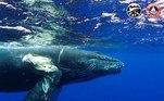 """GRAF9236. MADRID, 27/06/2021.- Involucrar al sector marítimo internacional para evitar las colisiones de barcos con ballenas es el objetivo de la """"whale-safe"""", una certificación de seguridad creada para reducir la """"masacre silenciosa"""" de los casi 20.000 ejemplares que, según algunas estimaciones, mueren embestidos cada año. A día de hoy la industria ballenera mata """"unas mil ballenas al año con fines comerciales"""", por lo que las colisiones entre cetáceos y barcos han pasado a ser """"la principal amenaza"""", explica a Efe Paolo Bray, director de la Organización Mundial de Sostenibilidad y del programa de certificación Friend of the Sea (Amigo del Mar). EFE/ World Sustainability Organization/ SOLO USO EDITORIAL/SOLO DISPONIBLE PARA ILUSTRAR LA NOTICIA QUE ACOMPAÑA (CRÉDITO OBLIGATORIO)"""