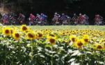-FOTODELDÍA- EA5671. LIBOURNE (FRANCIA), 16/07/2021.- El pelotón pasa por un campo de girasoles durante la etapa 19 del Tour de Francia, este viernes. EFE/ Guillaume Horcajuelo