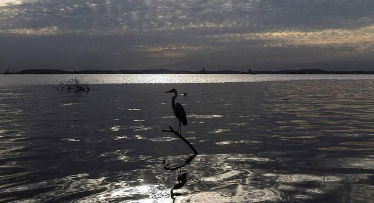 Brasil é o 1º do mundo em potencial de descoberta de espécies