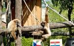 """-FOTODELDÍA- EA5579. ZAGREB (CROACIA), 18/06/2021.- Unos monos gibones """"predicen"""" el resultado del partido de la Eurocopa entre la República Checa y Croacia, este viernes en el zoológico de Zagreb, Croacia. El macho, Ken (i), que llegó a Zagreb donado por un zoo de Holanda, y la hembra, Kulicka (d), procedente de la República Checa, junto con sus hijos, han predicho un resultado de empate con muchos goles en el partido que se celebra este viernes. EFE/ Antonio Bat"""