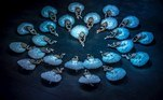 Prague (Czech Republic), 25/03/2019.- Dancers of the Czech National Ballet perform during a costume rehearsal of 'Swan Lake' at the National Theatre in Prague, Czech Republic, 25 March 2019 (re-issued 18 May 2020). As prominent in both sky and sea, the color blue is often associated with open spaces, freedom, depth and wisdom. In psychology blue is viewed as a non-threatening color and it is believed to have positive and calming effects on body and mind. Often linked with intellect, confidence and reliability, it is known in corporate America as a power color. (República Checa, Praga) EFE/EPA/MARTIN DIVISEK ATTENTION: This Image is part of a PHOTO SET *** Local Caption *** 55127372