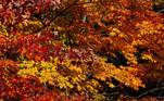 Harts Location (United States), 10/10/2018.- Leaves of various colors on the trees in Harts Location, New Hampshire, USA 10 October 2018 (reissued 14 May 2020). Orange is the color that envelopes tires that burn in the streets during social unrest and the flames that turn structures to ash during four-alarm fires. It is the color of the lava that flows down the facades of volcanoes and the color of fireworks that illuminate the skies as people gather to celebrate the new year. (Incendio, Estados Unidos) EFE/EPA/CJ GUNTHER ATTENTION: This Image is part of a PHOTO SET *** Local Caption *** 54691586