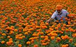 Jammu (India).- An Indian villager collects marigold flowers from a field during the nationwide lockdown at Abdullian village, near the India-Pakistan international border, 35km from Jammu, India, 20 April 2020 (reissued 14 May 2020). Orange is the color that envelopes tires that burn in the streets during social unrest and the flames that turn structures to ash during four-alarm fires. It is the color of the lava that flows down the facades of volcanoes and the color of fireworks that illuminate the skies as people gather to celebrate the new year. (Incendio) EFE/EPA/JAIPAL SINGH ATTENTION: This Image is part of a PHOTO SET