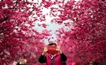 Taipei (Taiwan).- A visitor takes a photo under pink cherry blossoms in Taichung, Taiwan, 27 February 2018 (reissued 19 May 2020). Pink became fashionable as a luxurious color worn by both sexes in the mid 1700s. By the time men moved to darker hues, women adopted pink and it became the girls' color. In the 1960s high fashion and celebrities embraced pink. A significant change took place when the color became a symbol for women's and LGBTQ rights in the 1970s and, from 1990 on, also the symbolic color for the struggle against breast cancer. Subsequently, pink is now recognized as a color of protest, femininity, joy, energy and affirmation. (Moda, Protestas) EFE/EPA/RITCHIE B. TONGO ATTENTION: This Image is part of a PHOTO SET *** Local Caption *** 54160513
