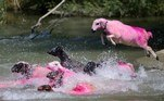 Denizli (Turkey).- A herd of dyed pink sheep jumps in the Menderes River during the traditional sheep river-crossing competition in the village of Asagiseyit, near Denizli, Turkey, 25 August 2013 (reissued 19 May 2020). Pink became fashionable as a luxurious color worn by both sexes in the mid 1700s. By the time men moved to darker hues, women adopted pink and it became the girls' color. In the 1960s high fashion and celebrities embraced pink. A significant change took place when the color became a symbol for women's and LGBTQ rights in the 1970s and, from 1990 on, also the symbolic color for the struggle against breast cancer. Subsequently, pink is now recognized as a color of protest, femininity, joy, energy and affirmation. (Moda, Protestas, Turquía) EFE/EPA/ERDEM SAHIN ATTENTION: This Image is part of a PHOTO SET *** Local Caption *** 50980742