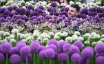 London (United Kingdom).- An exhibitor adjusts a display of allium ahead of the RHS Chelsea Flower Show in London, Britain, 19 May 2019 (reissued 20 May 2020). Situated between the hues of red and blue, the color purple is widely considered both energetic and relaxing. Because of its rarity in nature and historic use by royals and high-ranked priests, purple still conjures connotations of luxury, regality, wealth and power. (Reino Unido, Londres) EFE/EPA/NEIL HALL ATTENTION: This Image is part of a PHOTO SET