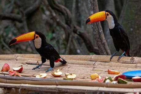 Pantanal e Amazônia são locais menos preocupantes