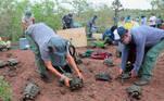 -FOTODELDIA- AME9280. GALÁPAGOS (ECUADOR), 02/03/2021.- Fotografía sin fechar y cedida por el Parque Nacional Galápagos (PNG) que muestra la liberación de 191 tortugas gigantes juveniles, en la isla Santa Fe, en el centro del archipiélago de Galápagos (Ecuador). El Parque Nacional Galápagos (PNG) ha liberado a 191 tortugas gigantes juveniles en la isla Santa Fe, en el centro del archipiélago de Galápagos, en el marco de un plan de restauración ecológica de esa zona insular. EFE/ Ministerio Ambiente SOLO USO EDITORIAL SOLO DISPONIBLE PARA ILUSTRAR LA NOTICIA QUE ACOMPAÑA (CRÉDITO OBLIGATORIO)