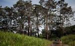 BRA02. AUTAZES (BRASIL), 06/02/21.- Trabajadores del Distrito Sanitario Especial Indígena (DSEI) de Manaos se dirigen a vacunar a habitantes de la aldea Soares, el 5 de febrero de 2021, en el municipio de Autazes, estado de Amazonas (Brasil). En condiciones extremas, la vacunación contra la covid-19 de las comunidades indígenas de la Amazonía brasileña se ha convertido en una odisea a contrarreloj, ante el repentino aumento de contagios y la irrupción de la nueva variante del virus que ya preocupa a medio mundo. EFE/ Raphael Alves