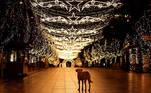 -FOTODELDIA- EA1361. PRISTINA (SERBIA), 07/12/2020.- Un perro callejero camina por la plaza desierta iluminada con luces navideñas y decoración de temporada en Pristina (Kosovo). EFE/EPA/VALDRIN XHEMAJ
