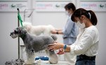 Tokyo (Japan), 01/04/2021.- Dog groomers participate in a contest at the 'Interpets' international pet fair in Tokyo, Japan, 01 April 2021. As the coronavirus pandemic is limiting access from abroad, some 300 exhibitors based in Japan will present their products to business visitors and pet lovers until 04 April at the event, which is the largest international trade fair in the Japanese pet market. With the COVID-19 pandemic, pets are giving comfort to people who are spending more time home due to lockdowns and telework, boosting the pet products market. (Japón, Tokio) EFE/EPA/FRANCK ROBICHON