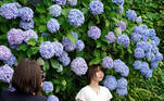 Tokyo (Japan), 15/06/2021.- A young woman poses for a friend before Hydrangea in full bloom at a park in Tokyo, Japan, 15 June 2021. Hydrangea flowers are a symbol of the rainy season in Japan. (Japón, Tokio) EFE/EPA/FRANCK ROBICHON