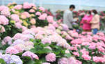 Jeju Island (Korea, Republic Of), 12/04/2021.- Hydrangeas are in full bloom at Hueree Park in the city of Seogwipo on South Korea's largest resort island of Jeju, South Korea, 12 April 2021. (Corea del Sur) EFE/EPA/YONHAP SOUTH KOREA OUT