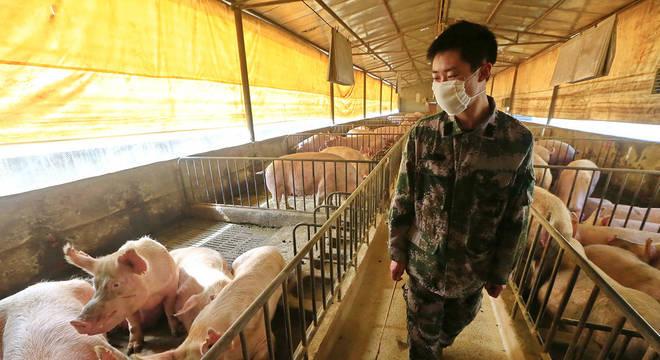 Nova cepa  do H1N1 circula em porcos e tem potencial para infectar humanos