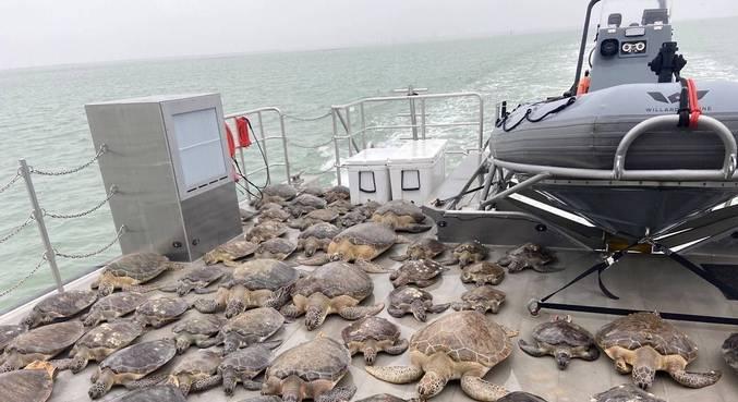 Tartarugas resgatadas no Texas voltam ao oceano