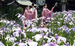 Fukutsu (Japan), 31/05/2021.- Shrine maidens perform a ritual dance with Japanese iris flowers at Miyajidake Shrine in Fukutsu City, Fukuoka Prefecture, southwestern Japan, 31 May 2021. The ritual was also broadcasted on Social Networking Service by the shrine for those who couldn't attend due the coronavirus traveling restrictions. (Japón) EFE/EPA/JIJI PRESS JAPAN OUT EDITORIAL USE ONLY/ NO ARCHIVES