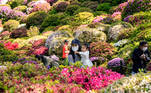 Tokyo (Japan), 19/04/2021.- People enjoy azalea flowers at Nedu/Nezu Shrine garden in Tokyo, Japan, 19 April 2021. Azalea Flowers bloomed 10-14 days ahead of the usual date this year, experts claim climate change is the reason. (Japón, Tokio) EFE/EPA/KIMIMASA MAYAMA