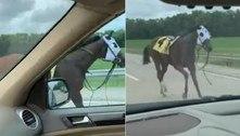 Égua escapa de pista de corrida e dispara pela contramão de rodovia