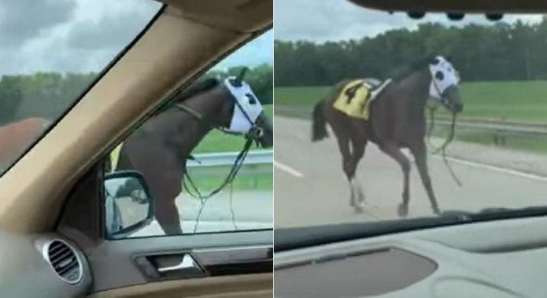 Égua escapa de uma pista de corrida nos EUA e disparou pela contramão de uma rodovia