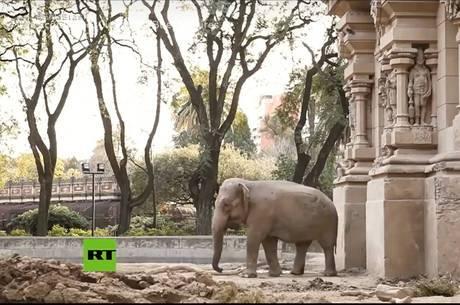 Elefanta será transferida para santuário em Mato Grosso