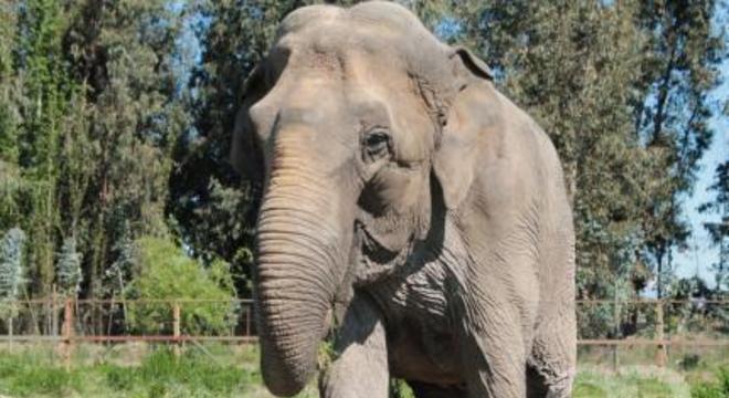 elefanta ramba